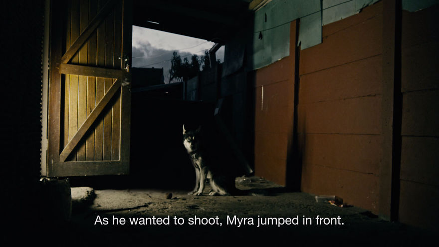 Dog-Takes-Bullet-To-Save-Humans6__880