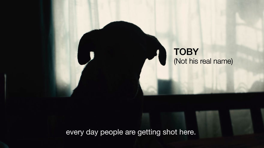 Dog-Takes-Bullet-To-Save-Humans__880